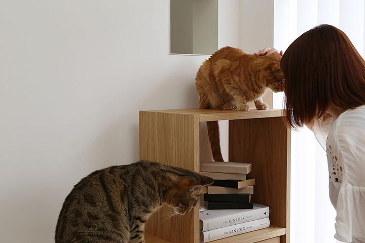 猫だらけな「鎌倉の家」