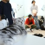 無印良品タオルムービーに猫大使登場!撮影レポート