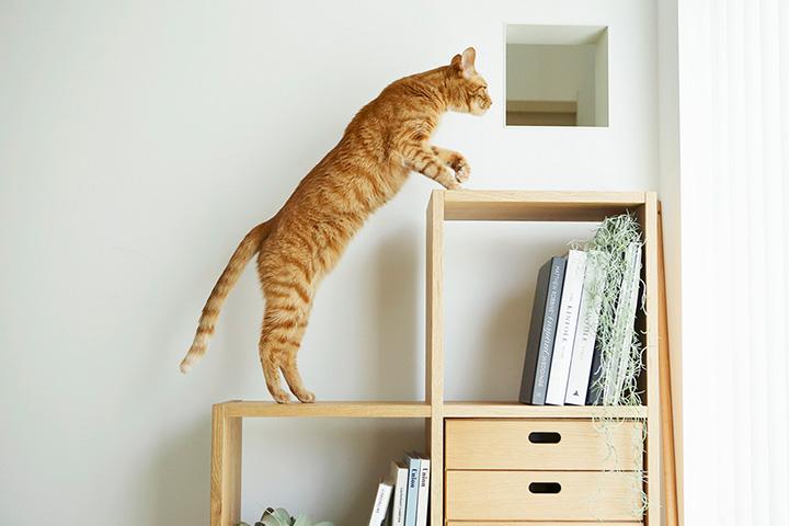 鎌倉の家の猫仕様-その1(キャットステップ&猫窓)