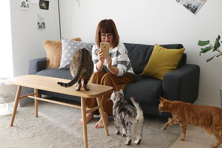 鎌倉の家の猫仕様-その2(オーダーソファカバー)