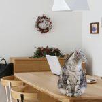 冬のエアコンの使い方と室内の湿度