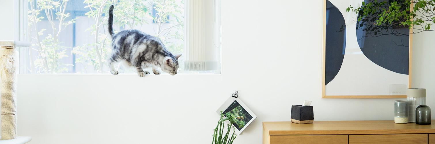 鎌倉の家大使の住まいレポート『猫4匹と無印良品の家で暮らしています。』