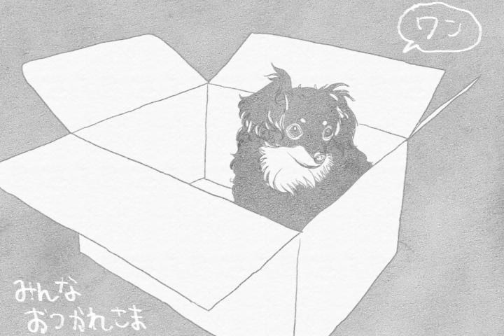 犬的視点での自粛生活